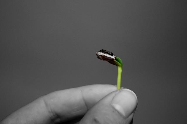 росток в руке
