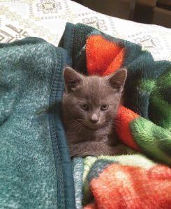 Приучить кота спать ночью