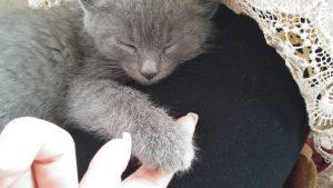 Пиксель спит