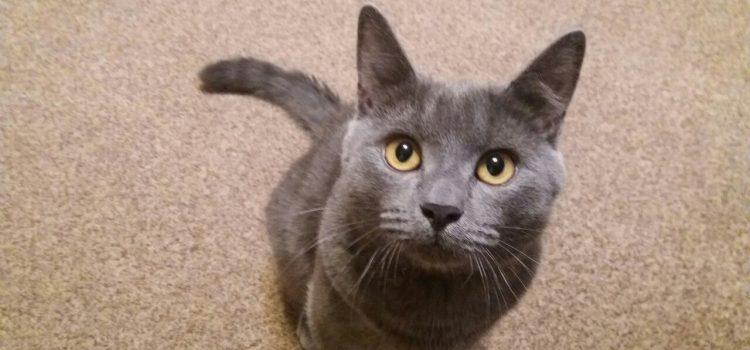 Кот по кличке Пиксель